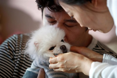 Vợ chồng anh Kang chơi đùa cùng Sancho, thú cưng của anh chị. Hai vợ chồng quyết định không sinh con vì chi phí và áp lực lớn.