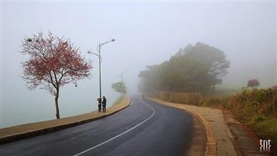Trên những con đường đồi, màu hồng hoa cũng thấp thoảng trong sương trắng. (Ảnh: Trương Ngọc Thụy)