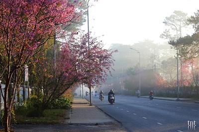 Bình minh Đà Lạt trong trẻo với nắng, sương mù và hoa. (Ảnh: Trương Ngọc Thụy)