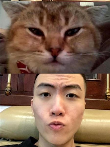 Biểu cảm của chú mèo Mon khi thấy bố Bách có tóc mới