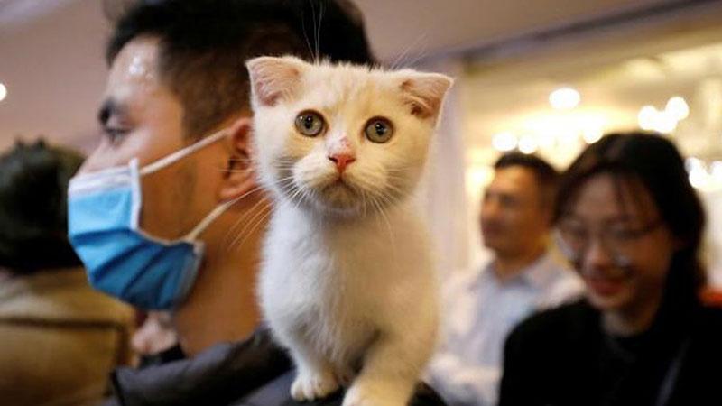 Mèo bị nhiễm virus corona từ người chủ tại Bỉ